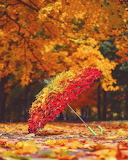 Autumn and art