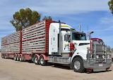 Kenworth B Double stock transport