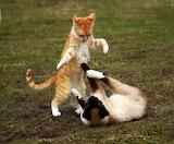 Cats-KungfuFighting