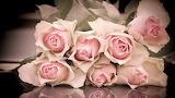 Розы 22