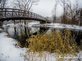 Grasses in the Snow Clinton River Michigan