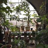 Plants.13