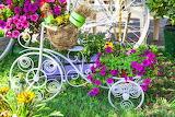 Flower-Bicycle