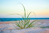 Grass on the beach