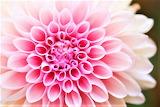 #Winter Flower