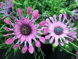 Flores-Exoticas-Del-Mundo