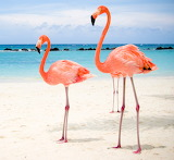 150 Flamenc Rosa - Pink Flamingo