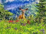 Wildflower deer
