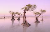 Walakiri beach-dancing trees Sumba island