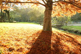 Leaves on the ground / tapis de feuilles