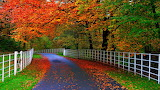 Colorful trees/leaves