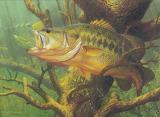 Freshwater 2004 tx