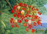 North foliage flowers madagascar