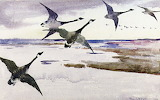 Frank Weston Benson, Canadian geese, 1895