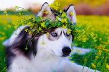 ☺♥ Flower crown...