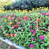 All sorts of flowers Howard Family Farm Statesville North Caroli