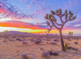 August Sunset in Joshua Tree, CA