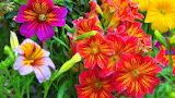 flowers###1099