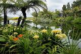 Clivias -Gardenza Pukekohe NZ