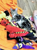 Cat playing with dolls