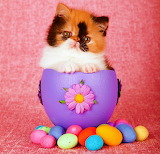 ☺♥ Easter kitty...