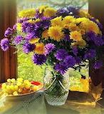 Viola, giallo e uva