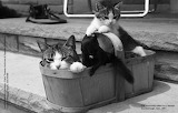 Cat, kitten and squirrel in a basket