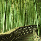 Promenade in the Bamboo Forest...