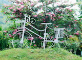 Bike, white, flowers, basket, nature