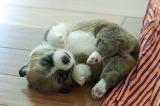 Cute-animal-pics-part8-2