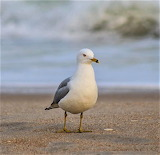 Sea gull on beach