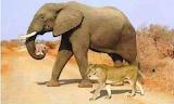 Good elephant
