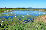 Rhode Island Wetlands