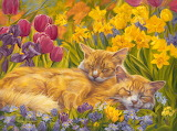 Nap time by Lucie Bilodeau