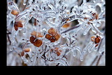 Ice covers trees and plants after a storm in Vienna. VA