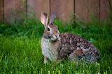 RabbitMilwaukee