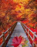 ^ Autumn în Kyoto,Japan