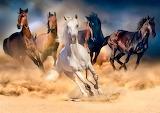 🐎Superb Stallions...