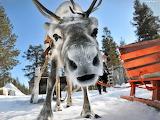 Christmas in Lapland @ Tapetus.pl...