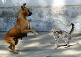 """/POTW/""""Cats and dogs""""-it happens anyway."""