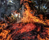 Fires destroying the Amazon Rainforest