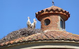 Storks On a Burgo Ranero Roof
