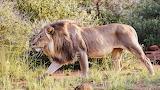 Solo on Tshepe