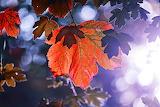 Leaf Photography