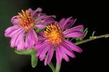 Macro photography pictures plants