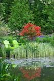 Mi-jardin-pantano