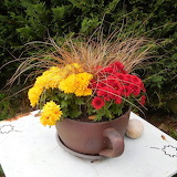 ^ Fall mums for color