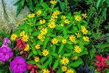 Flowers3 7-29-14