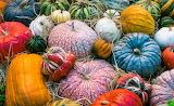 Colours-colorful-pumpkins-autumn
