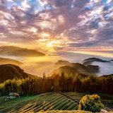 Green tea fields mountains sunrise Asia